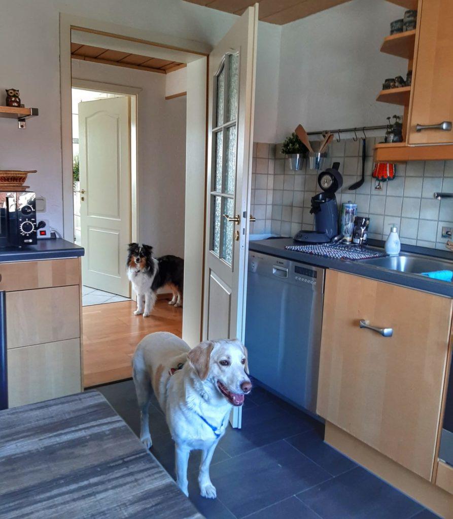 Hund - Ferienwohnung süden deutschland