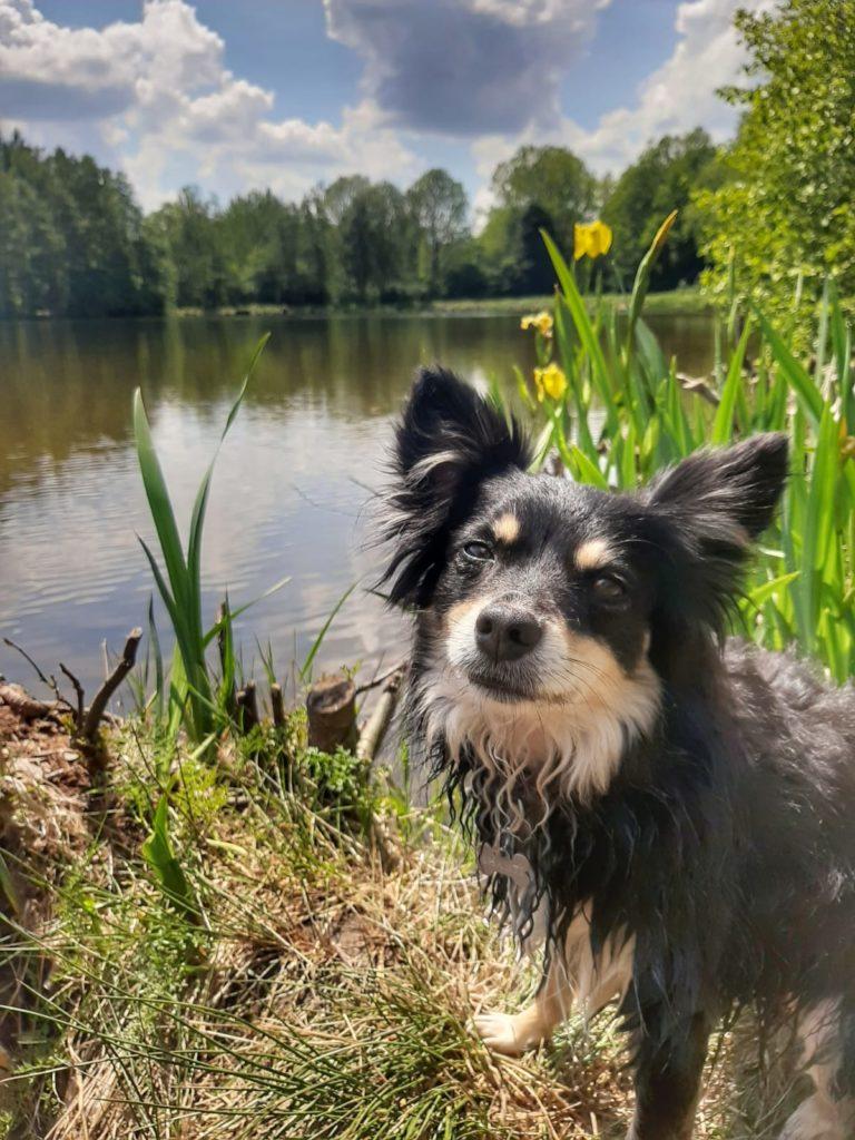 Hund - ferienwohnung