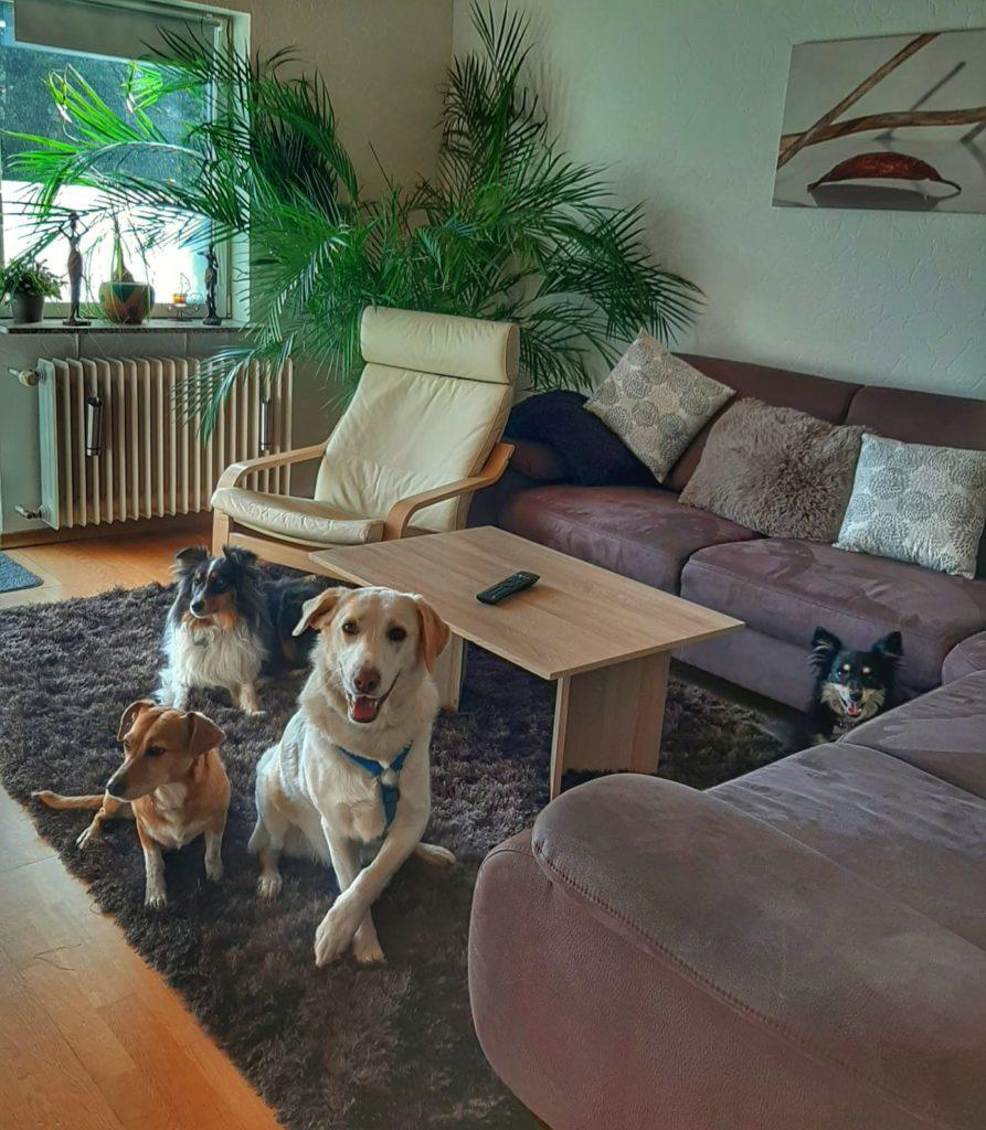Hunde - Hilis Gerienwohnung